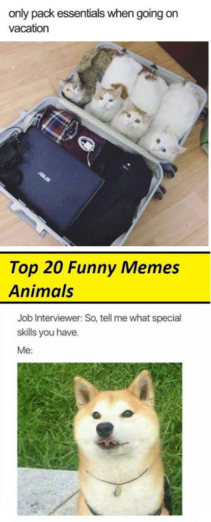 Top 20 Funny Memes Animals
