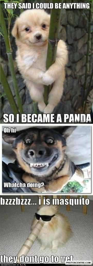 Top 25 Funny Dogs Memes Laughing