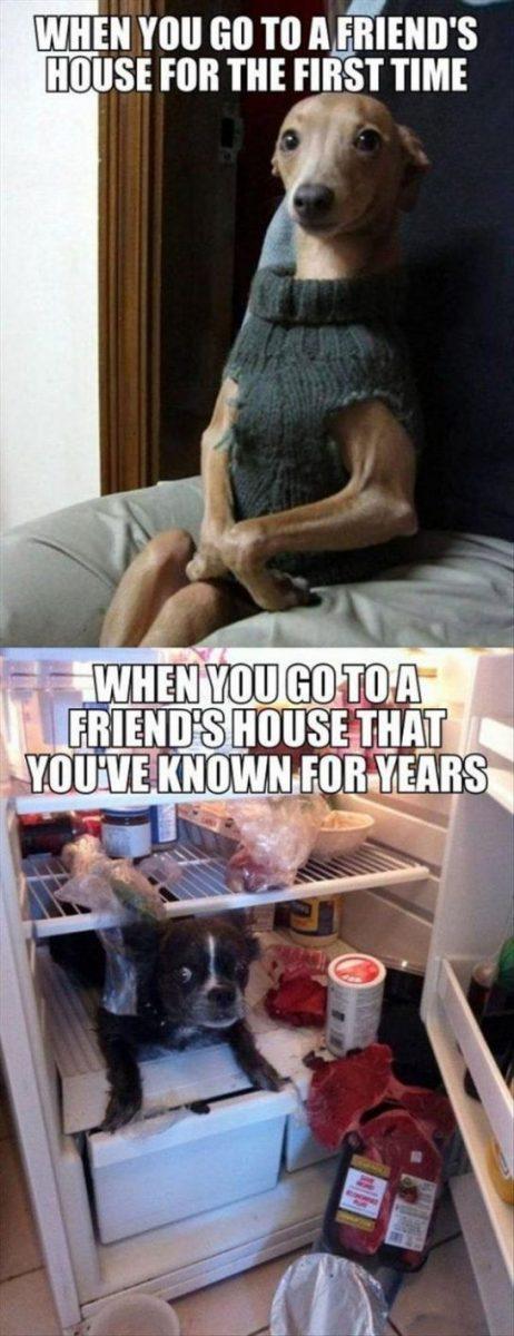 Top 20+ Funny Hilarious Memes