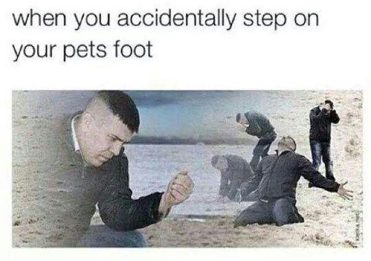 pets foot relatable meme