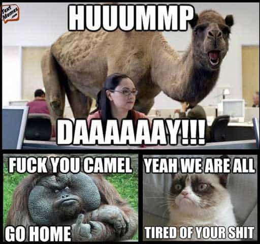 24 Funny Memes and Jokes so True 10