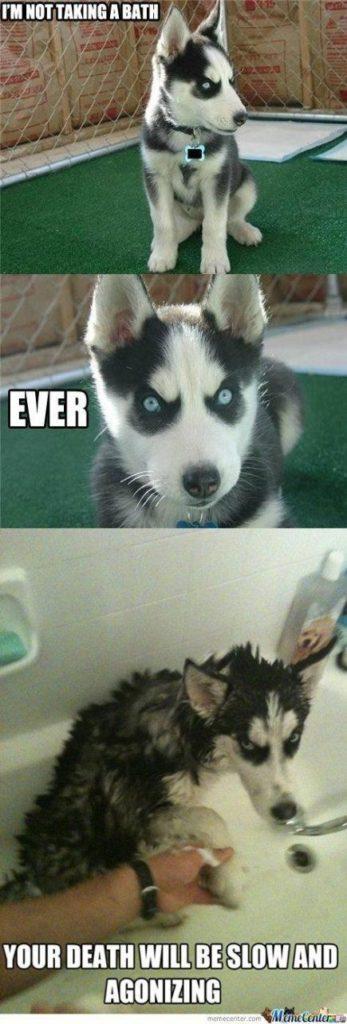 27 Funny Comebacks Memes Life 7