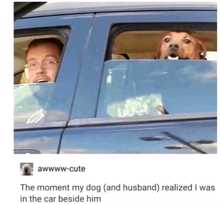 21 Funny Memes Humor Real Life Feelings 2