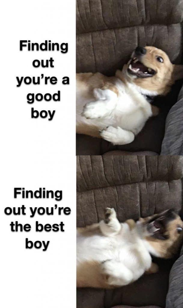 22 Clean Memes Humor Hilarious 2