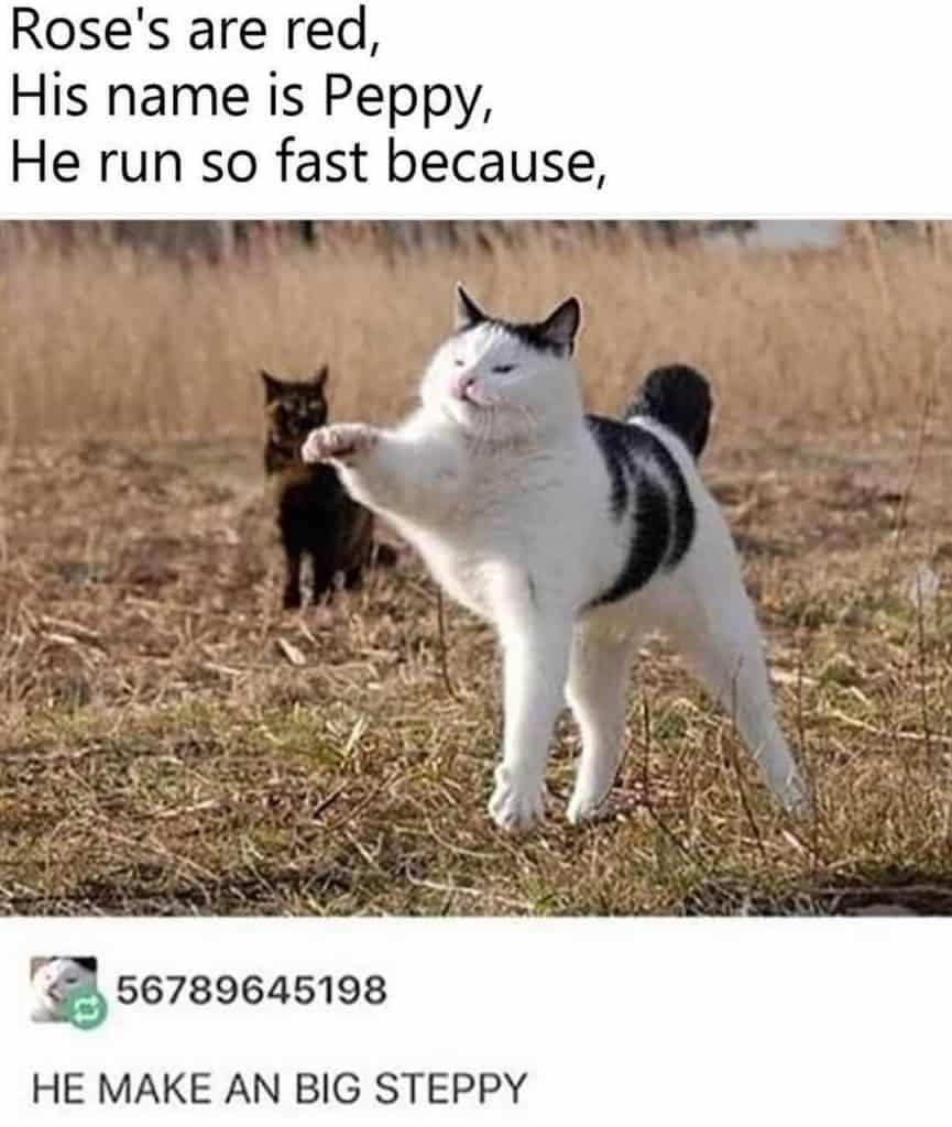22 Memes Humor Hilarious People 14