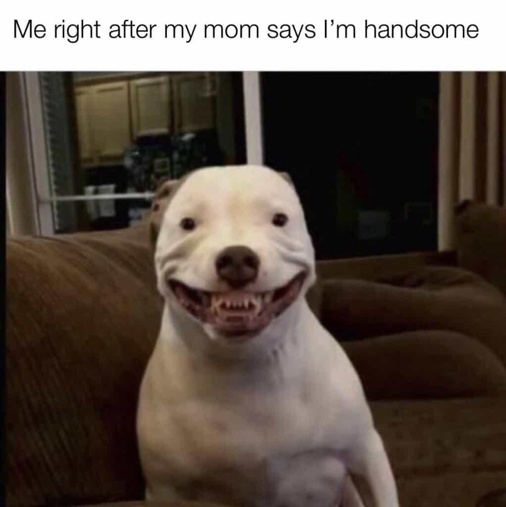 23 Funny Memes Humor Hilarious 7