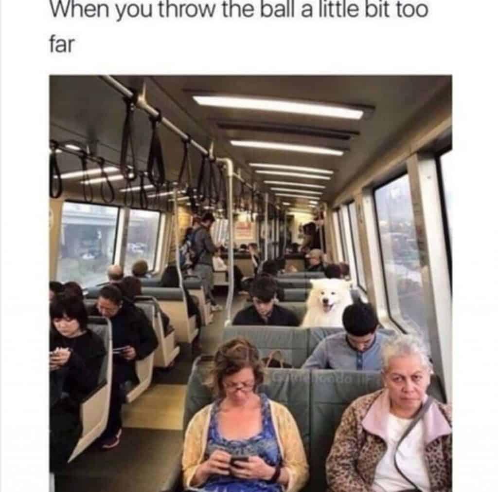 28 Memes Funny Life Posts 11