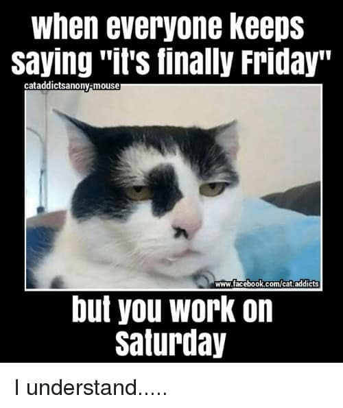 Saturday Memes when everyone keeps saying its finally friday cataddictsanony mouser www facebook com cat addicts 22767734