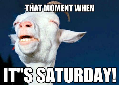 Saturday Memes