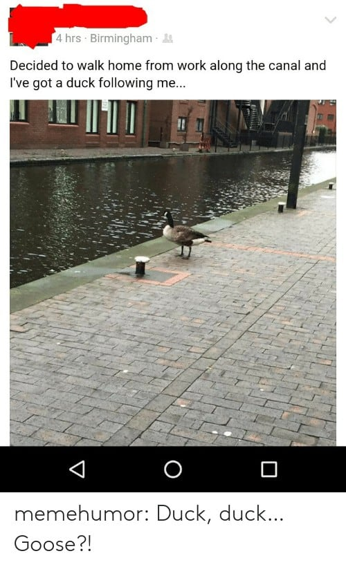 Duck Duck Goose Meme 1 1