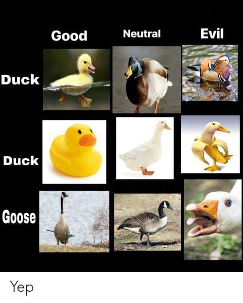 Duck Duck Goose Meme 6 1