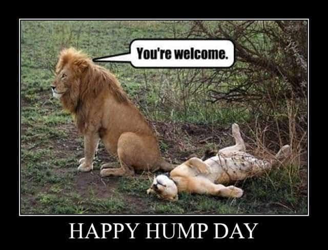 Hump Day Memes 11