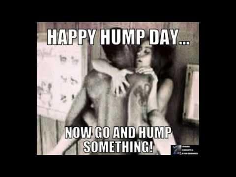 Hump Day Memes 14