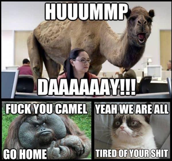 Hump Day Memes 2