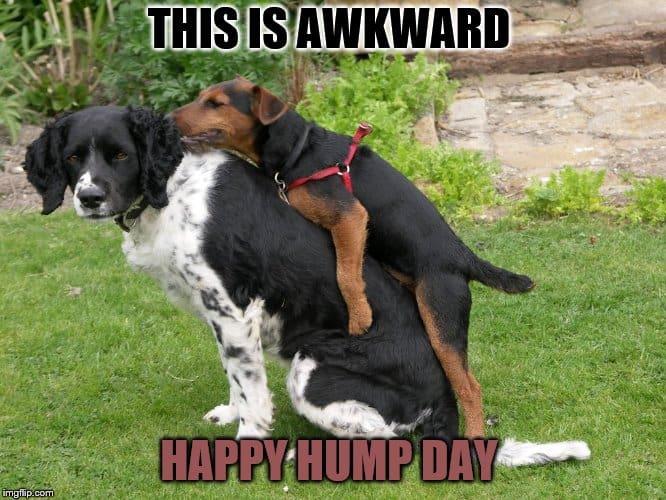 Hump Day Memes 3
