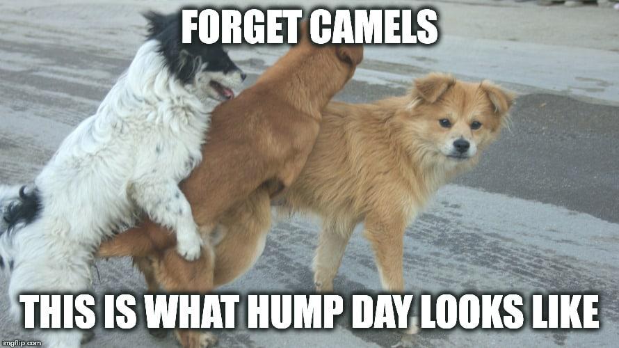 Hump Day Memes 4