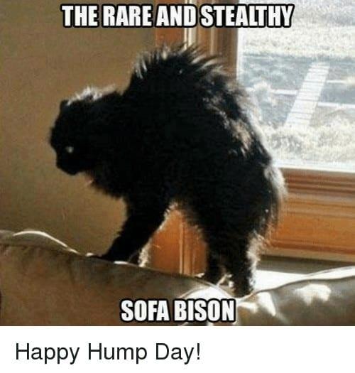 Hump Day Memes 5 1