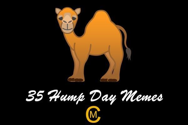 Hump Day Memes 6