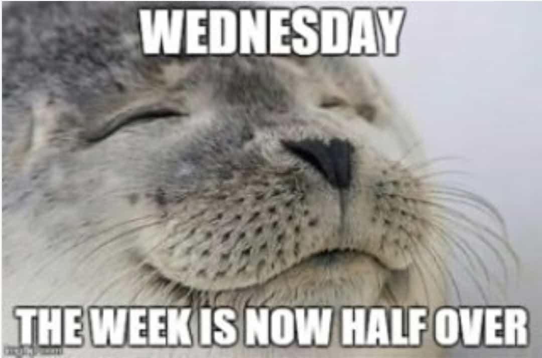 Hump Day Memes 7 1