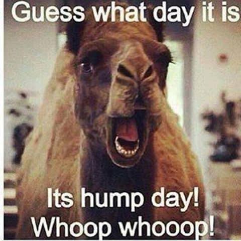 Hump Day Memes 8