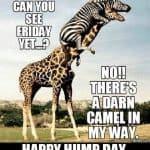 Hump Day Memes 9