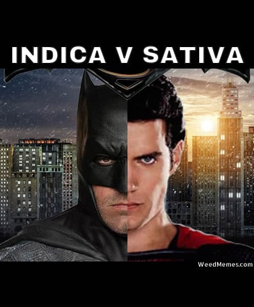 Sativa And Indica Memes 14