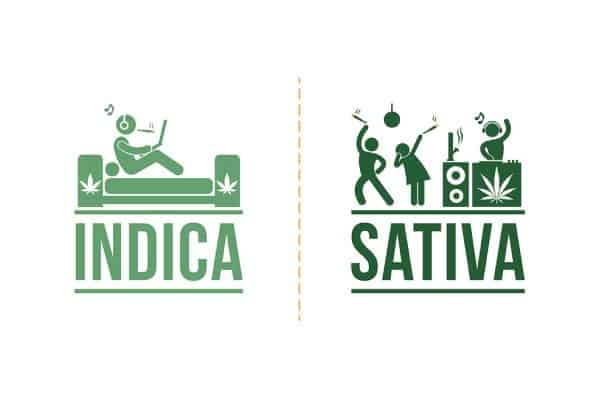 Sativa And Indica Memes 15