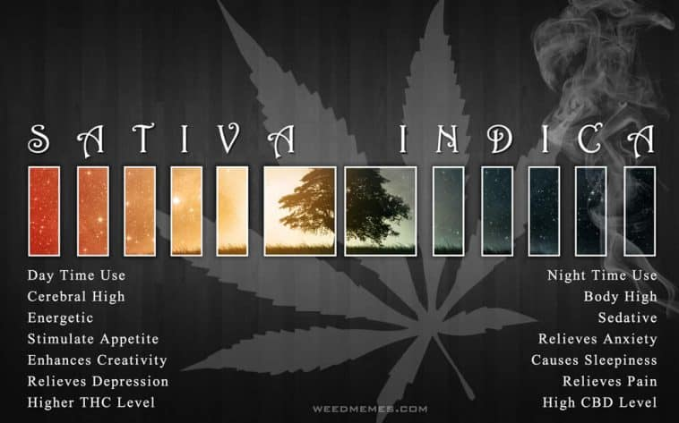 Sativa And Indica Memes 16