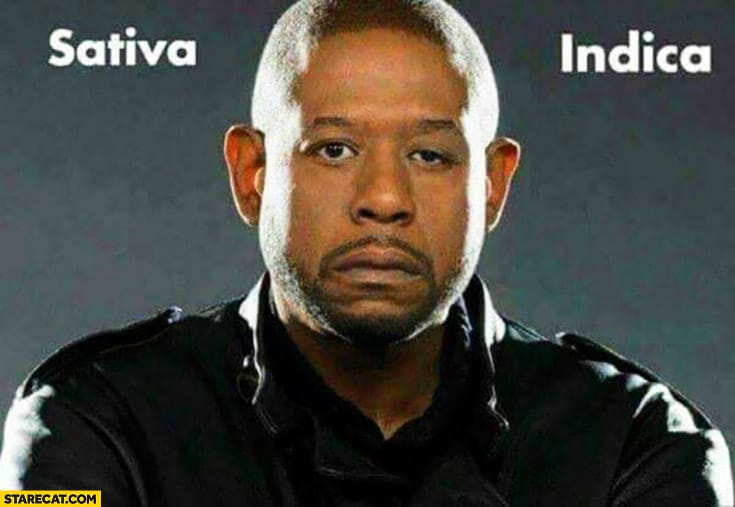 Sativa And Indica Memes 17