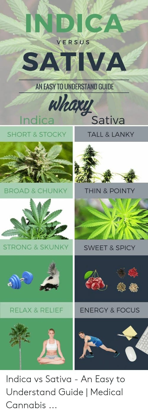 Sativa And Indica Memes 2 1