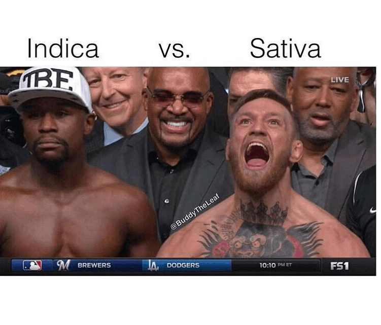 Sativa And Indica Memes 4