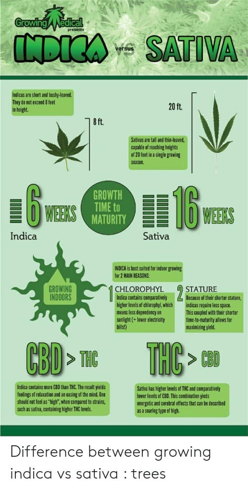 Sativa And Indica Memes 7 1