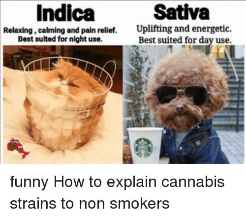 Sativa And Indica Memes 8 1
