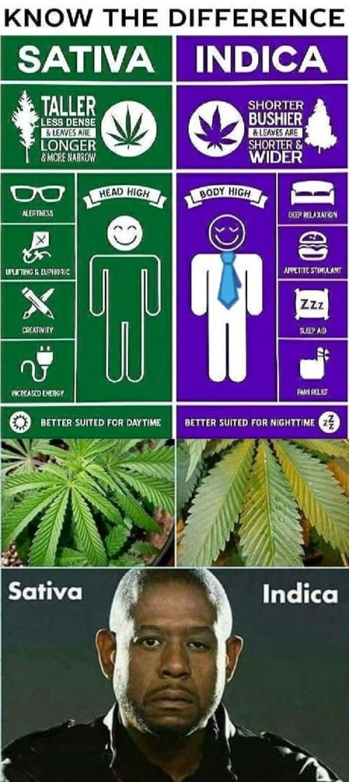 Sativa And Indica Memes 8
