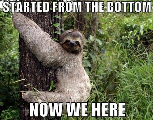 Sloth Memes 12