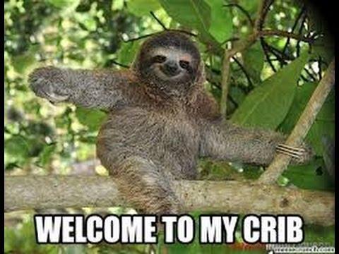 Sloth Memes 15
