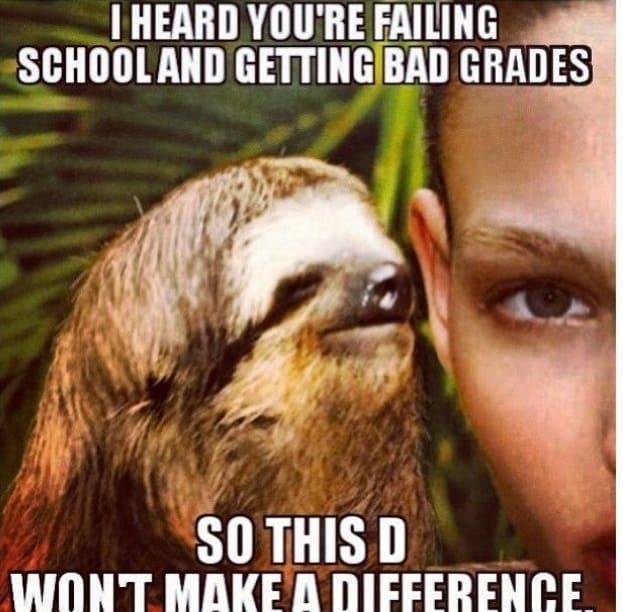 Sloth Memes 2