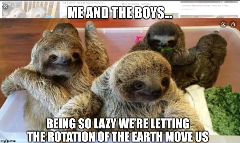 Sloth Memes 4