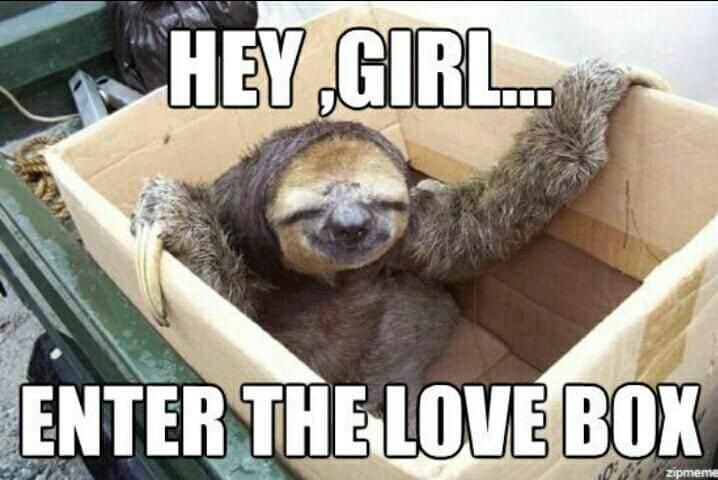 Sloth Memes 5