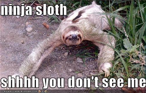 Sloth Memes 8