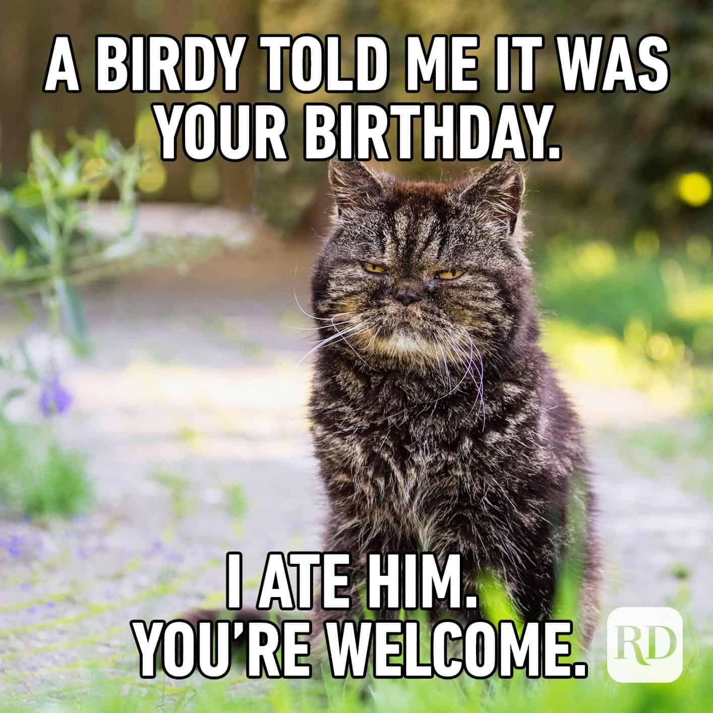 funny birthday memes 12