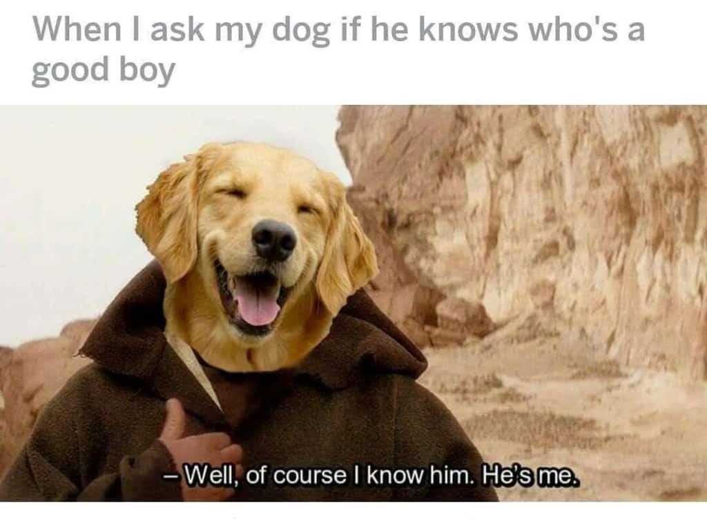 Star Wars Memes 20