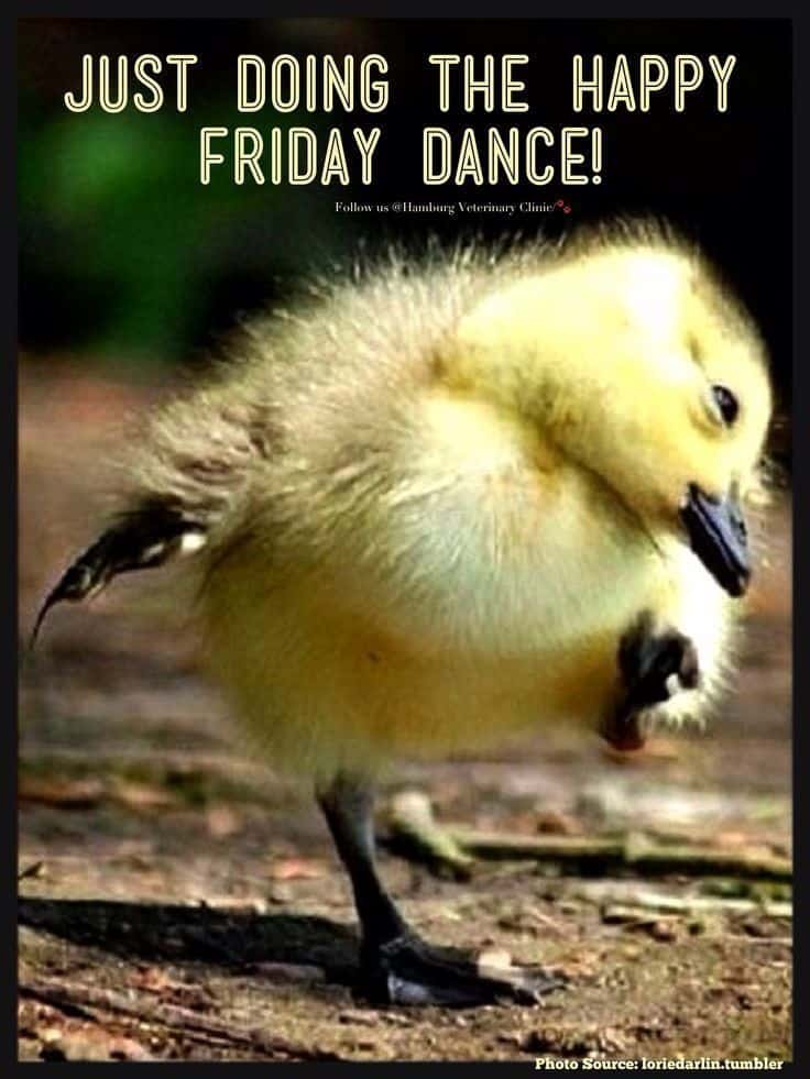 Happy Friday Meme 8