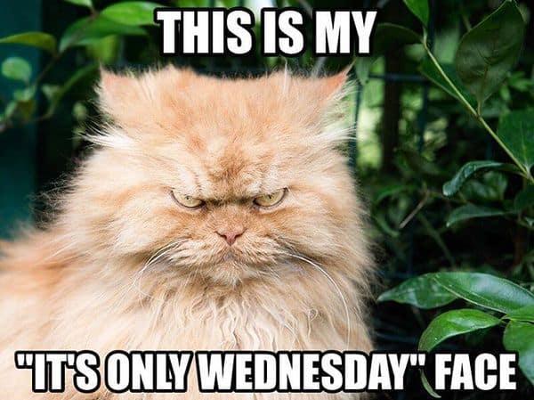 Happy Wednesday Memes 2