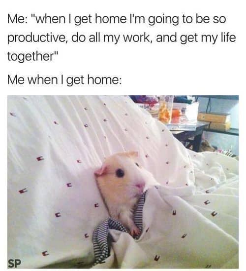 Sunday Memes 4