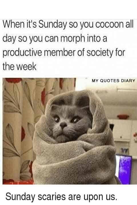 Sunday Memes 7