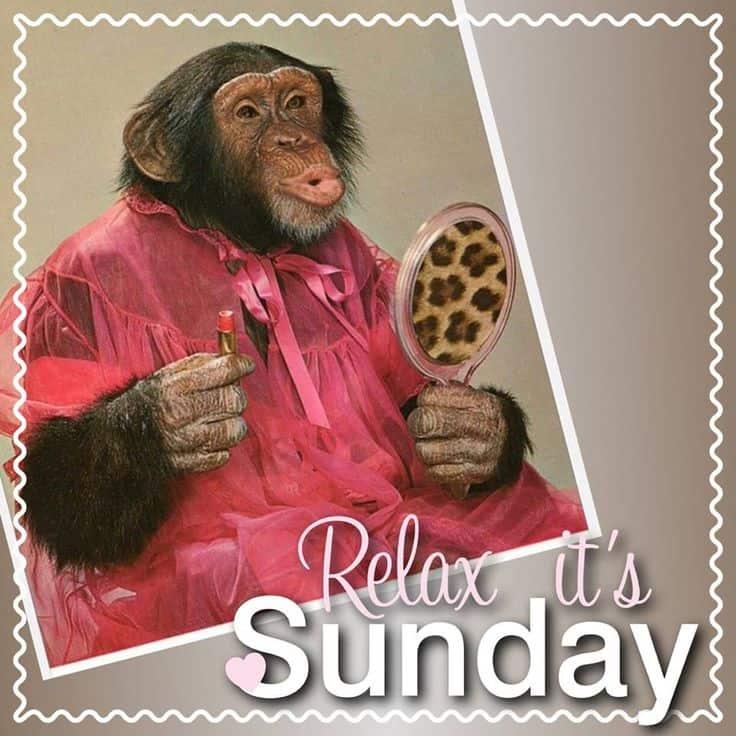 Sunday morning memes 7