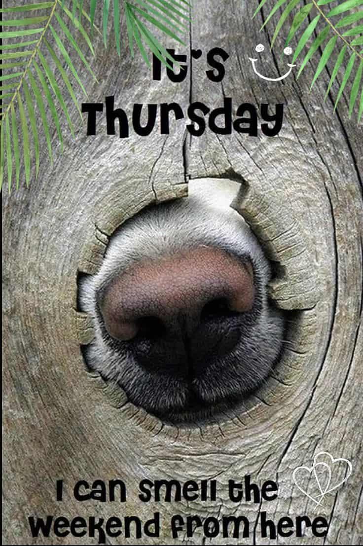 Thursday Memes 10