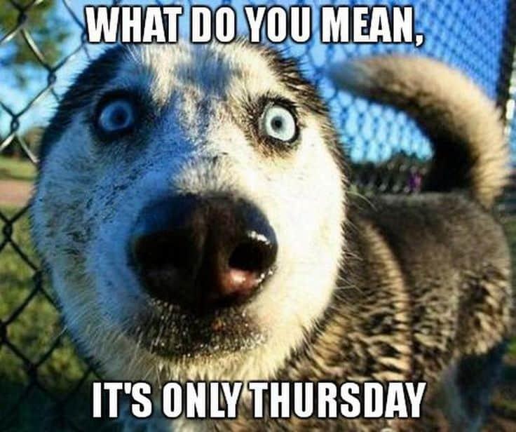 Thursday Memes 4