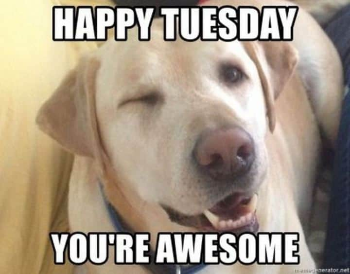 Tuesday Memes 15